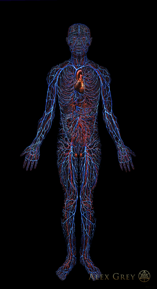 Cardiovascular System - Chapel of Sacred Mirrors
